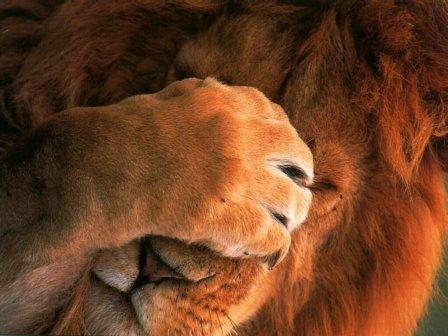 Leòn Avergonzado